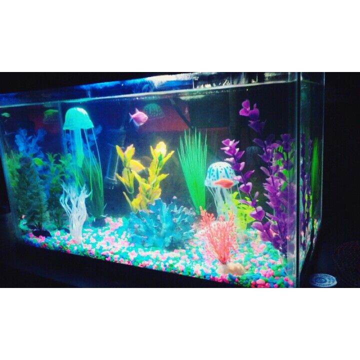 Freshwater glo fish tank | Pets | Pinterest | Names, Kid ...