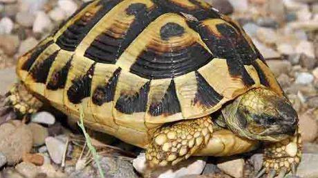 Dispozitive de urmărire, dotate cu baterii solare, montate pe broaște țestoase. MISTERUL care va fi elucidat