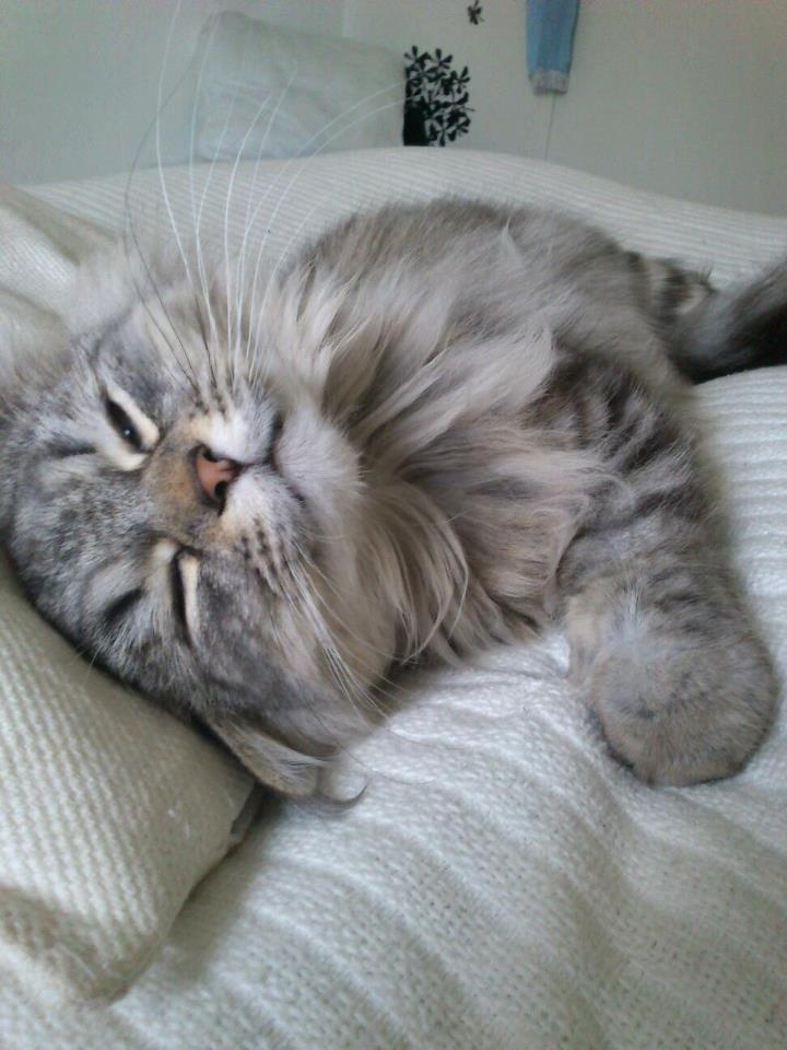 Cute cat, Gucci