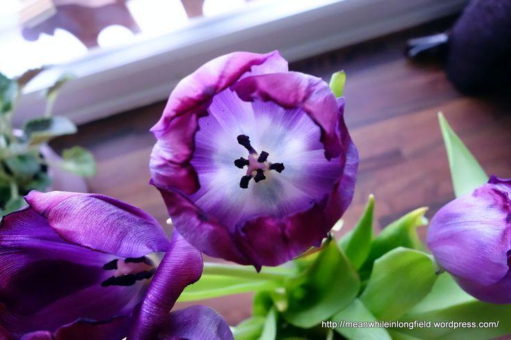 Tulip flower. Spring is here.