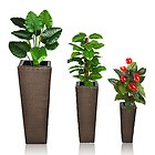EUR 49,99 - 3 Rattan Blumentöpfe Blumenkübel Blumen Ständer Pflanzen Topf Pflanzenkübel Vase - http://www.wowdestages.de/eur-4999-3-rattan-blumentopfe-blumenkubel-blumen-stander-pflanzen-topf-pflanzenkubel-vase/