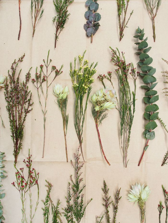 these native flowers are dried up but when planted can create biodiversity, at the same time it can survive different climates