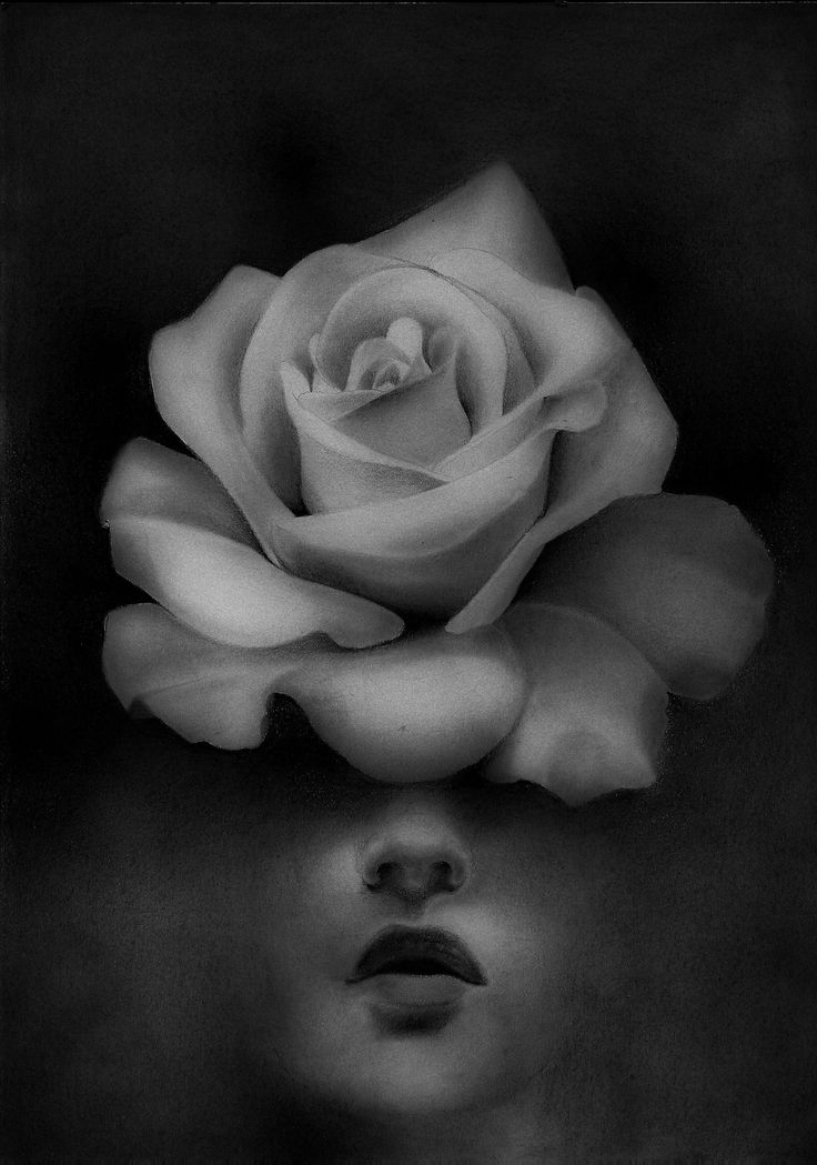 chirimasmind:POLLINATION #fineart#art#artist#girl #sketch #sketchbook #draw #drawings #trip #rose #flowers #blackandwhite #black#graphic#illustrations#rose
