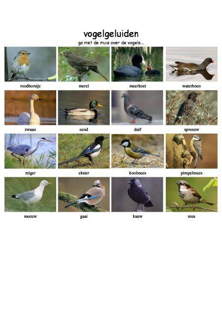 Vogelgeluiden - vogels in de winter