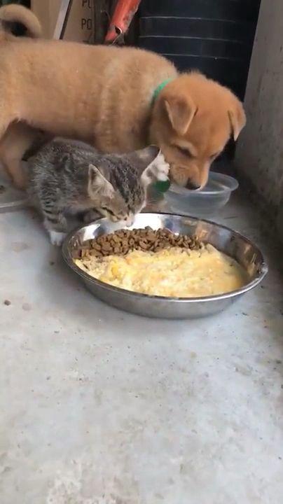 Funny 😆 Mean Kitten & Poor Puppy 😆