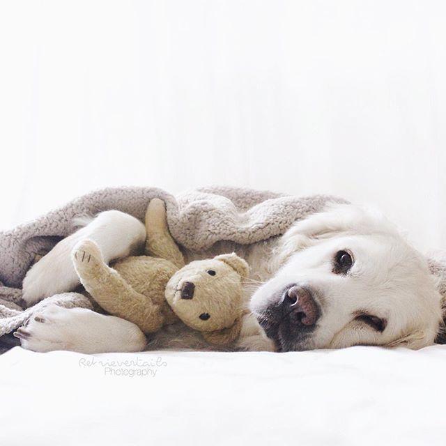 My teddy won't never leave my side ❤️ ⠀⠀⠀⠀⠀⠀⠀⠀⠀⠀⠀⠀⠀⠀⠀⠀⠀⠀⠀⠀⠀⠀⠀⠀⠀⠀⠀⠀⠀⠀#dogs #puppies #pup #cute #eyes #instagood #petstagram #dogsitting #photooftheday #ilovemydog #instagramdogs #nature #dogstagram #fun #dogoftheday #lovedogs #lovepuppies #hound #adorable #doglover #instapuppy #instadog #puppylove #puppylife #goldenpuppy #friends #love #teddy