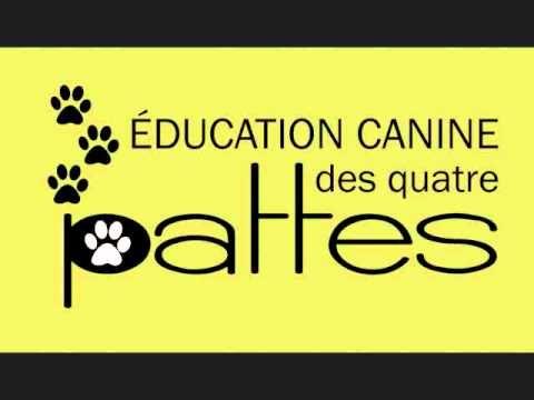 http://www.eduquatrepattes.ca Plusieurs chiens souffrent d'anxiété de séparation. Il s'agit d'un trouble du détachement qui plonge l'animal dans un état de p...