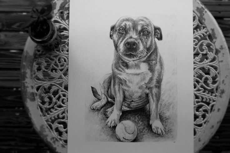 My drawing of Daisy the dog. Amy Peters-Artist Facebook