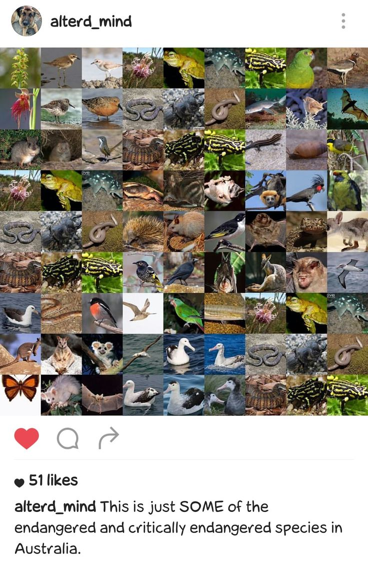This is just SOME of the endangered and critically endangered species in Australia