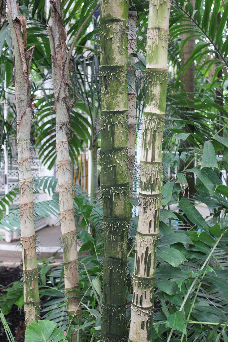 AW13 | Kew Gardens