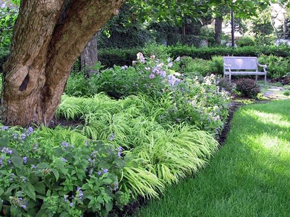 1000 images about dry shade plants on pinterest gardens for Garden trees for shade