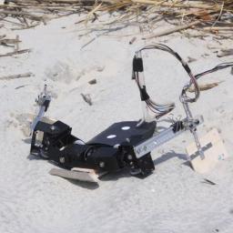 Amerikaanse wetenschappers hebben een robot ontwikkeld op basis vande bewegingen van zeeschildpadden. De robot kan zich goed en met een regelmatige snelheid bewegen in zand en op hard terrein.