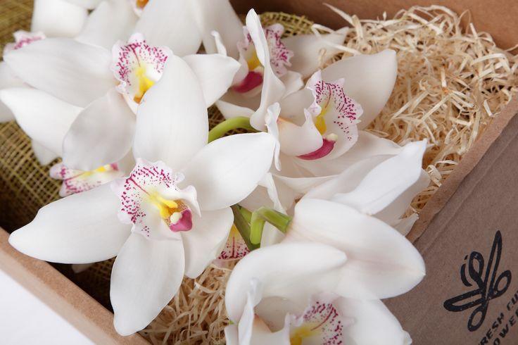 Орхидеи в подарочной коробке. Белые орхидеи. Цветы и подарки. Коробки с живыми цветами. Онлайн заказ. Доставка цветов и подарков.