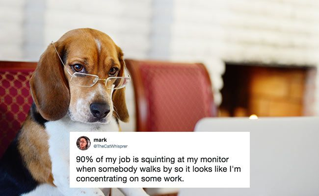 On Work Like A Dog Day Just 10 Hilarious Tweets For Every Office