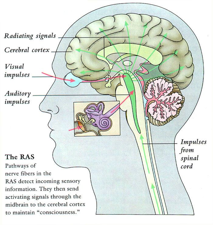23 best images about Psych on Pinterest | Pineal gland ...