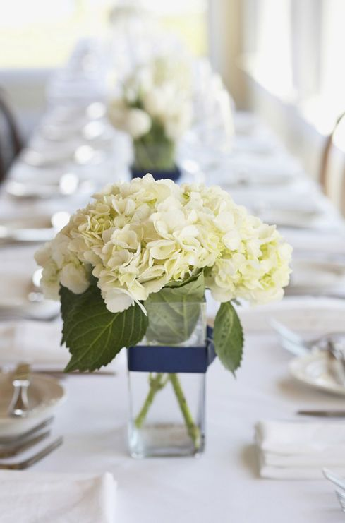 White Hydrangea are perfect for DIY wedding flowers as they are easy to arrange and, when ordered in white, can be made to match other decorations with a simple colorful ribbon. Hydrangea are available year-round from GrowersBox.com.: Ideas, White Flowers, Hydrangeas Centerpieces, Low Centerpieces, Cauliflowers, Simple Centerpieces, Navy Ribbons, Wedding Centerpieces, White Hydrangeas