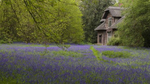 Queen Charlotte's Cottage surrounded by bluebells