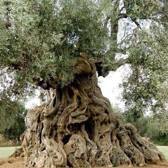 Entrer dans un tel arbre, c'est entrer dans la conscience du monde