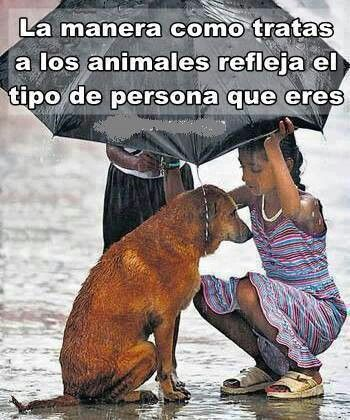 The manner in how you treat animals reflects what type of person you are...