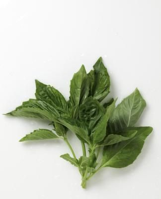 The Correct Way to Pick Basil Leaves (Holly, please remember to read this after planting basil in the garden next spring.)