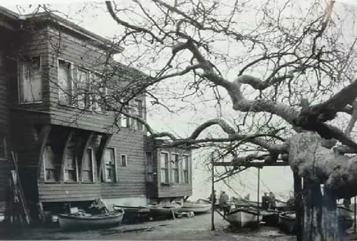 Çengelköy'de ağaç olmak (1960'lar