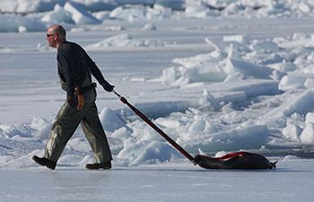 Anthony Bourdain and the seal hunt – will he eat crow?
