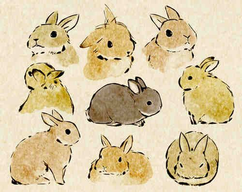 Sweet bunny illustrations                                                                                                                                                                                 Plus