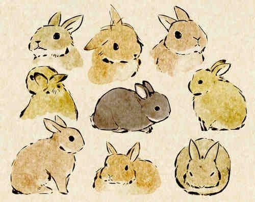 Sweet bunny illustrations