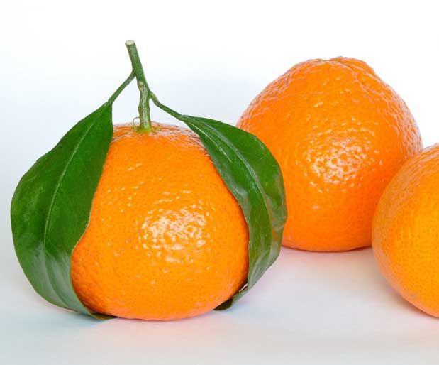 Mandalina İle Zihinsel Yorgunluğa Son VerinTurunçgiller grubunda yer alan mandalina, C vitamini ve beta karotenin çok iyi bir kaynağıdır.    Yazının Devamı: Mandalina İle Zihinsel Yorgunluğa Son Verin | Bitkiblog.com  Follow us: @bitkiblog on Twitter | Bitkiblog on Facebook