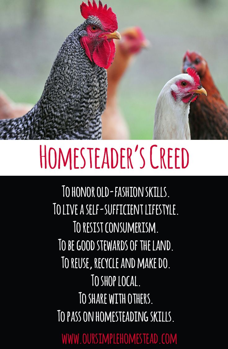 The Homesteader's Creed - The homesteading movement is spreading across the country at lighting speed. Families are looking for ways to live on less, be more self-sufficient, and are changing the way they look at how they live. #homesteading