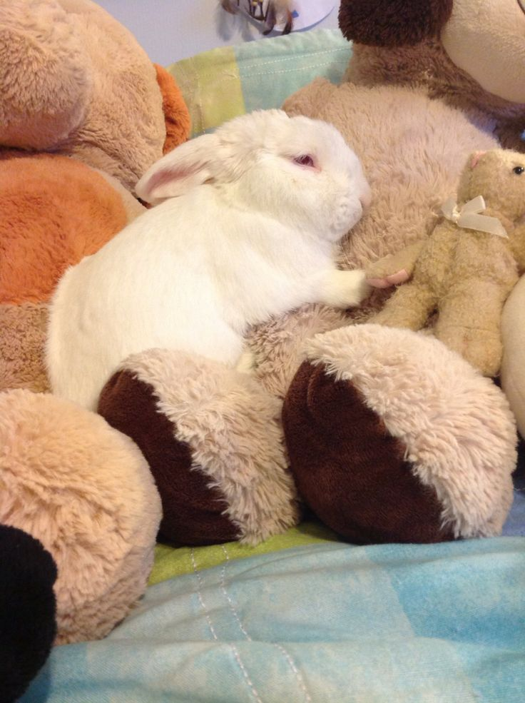 Bunny and his teddy :)