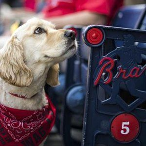 """Bring your dog to Bark in the Park at Turner Field for a Braves game!  Tickets for the Sunday, April 24, Bark in the Park event are now available! Select the number of human tickets that you would like to purchase below.  Please note: All canine tickets must be purchased with a human ticket. Fans with two or more dogs must have an additional """"owner"""" accompanying the additional canine. Each canine ticket includes a Braves leash!  Tickets will be mailed out to the address provided during the…"""