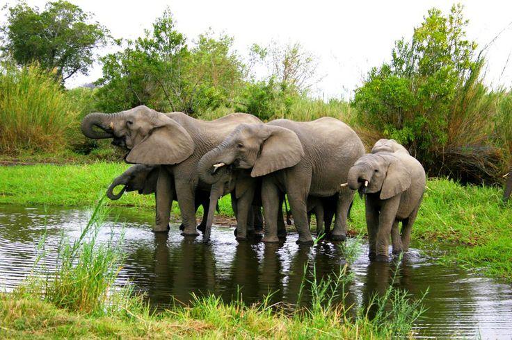 Ulusaba, Africa, Private Games Reserve, Safari at Indigolodges.com