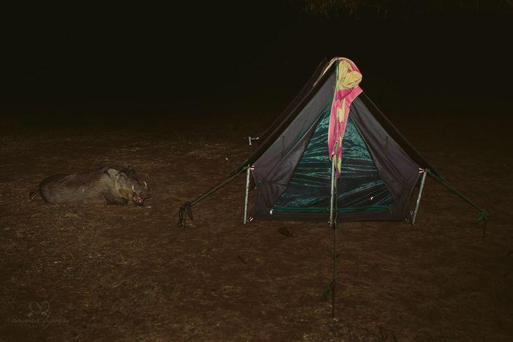 Uganda, camping, wad hog