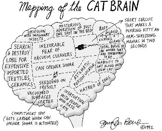 Map of a cat's brain