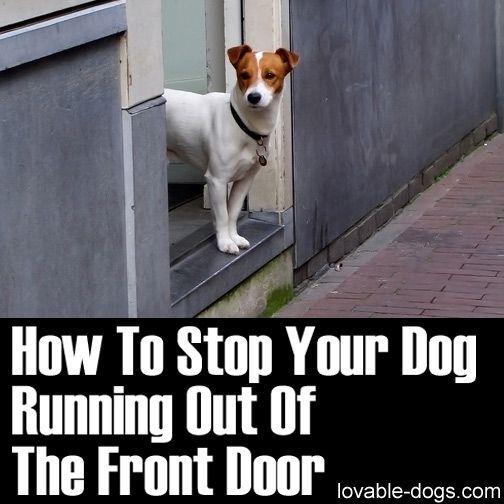 25+ Best Ideas About Dog Stroller On Pinterest