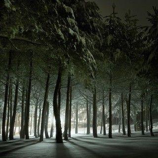 bosques-florestas-043