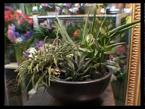 Ботаника. Пересаживаем комнатные цветы