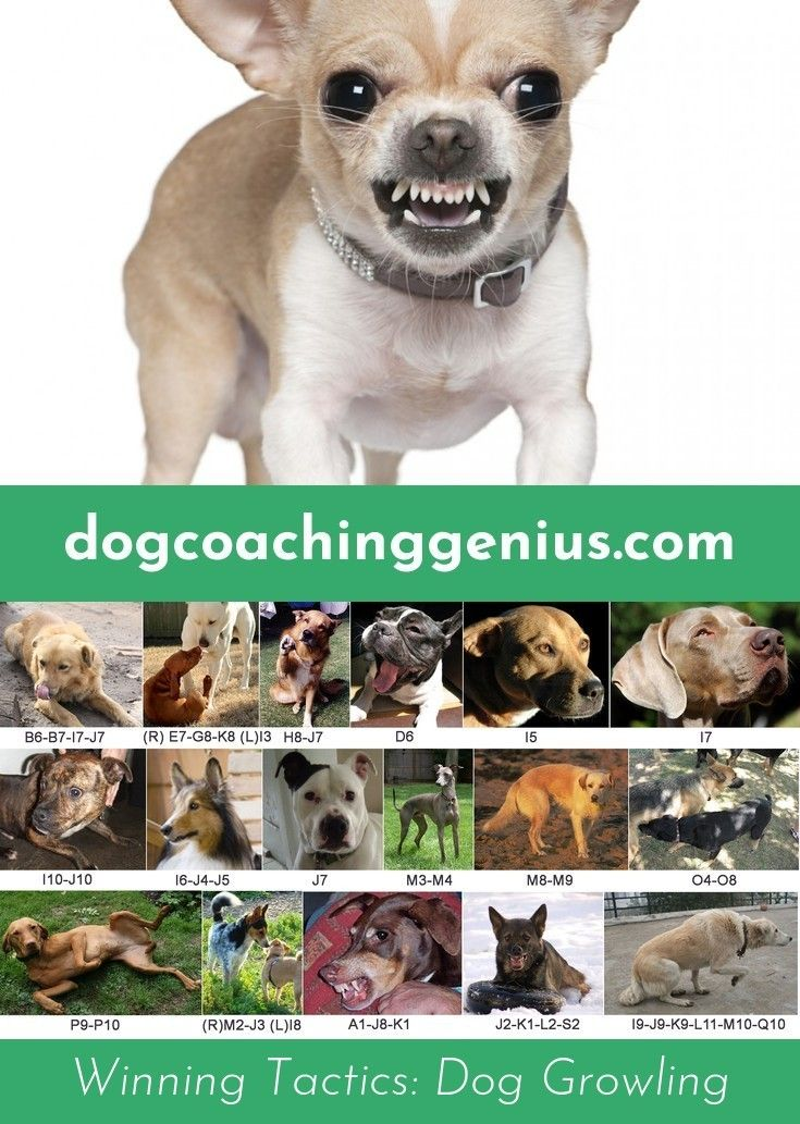 Find Out About Dog Growling Dog Growling Dogs Animals