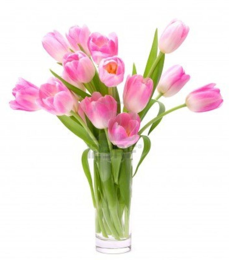 Tulip Wallpaper: Pink Tulips Bouquet In Vase Isolated On White Background