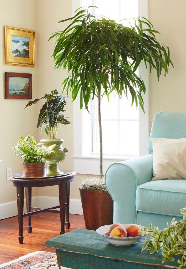 Kamerplanten zorgen voor een frisse en schone lucht doordat ze luchtzuiverend zijn. Combineer aantal kamerplanten met elkaar voor de beste schoonste lucht.
