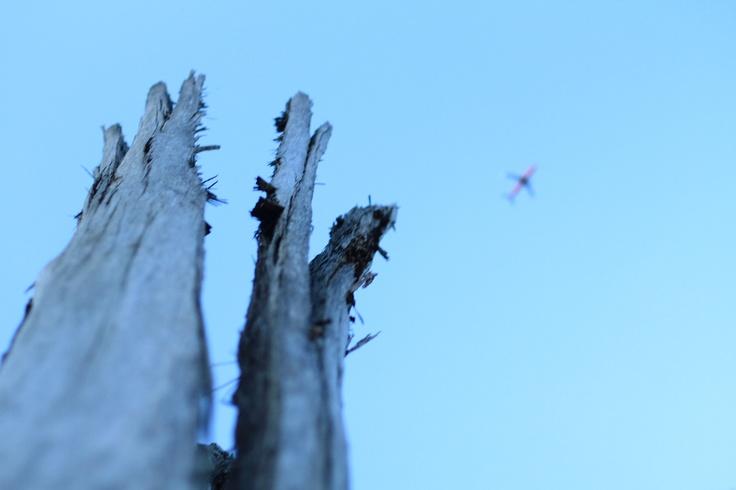 The dawn of flight in Murrenbong Campsite