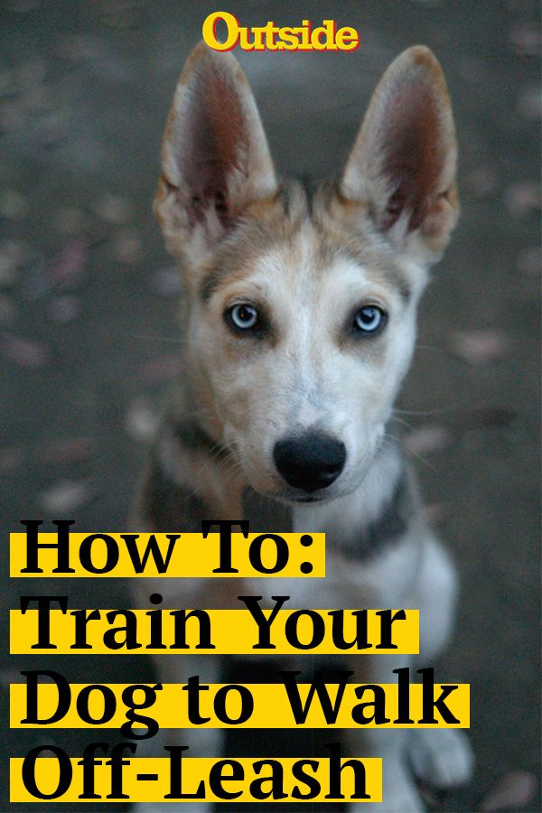 How To Train Your Dog To Walk Off Leash Training Your Dog Dog