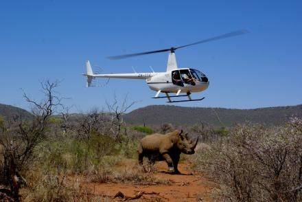 Get involved with Rhino conservation on a Jaci's conservation safari in Madikwe. Jaci's Lodges, Madikwe