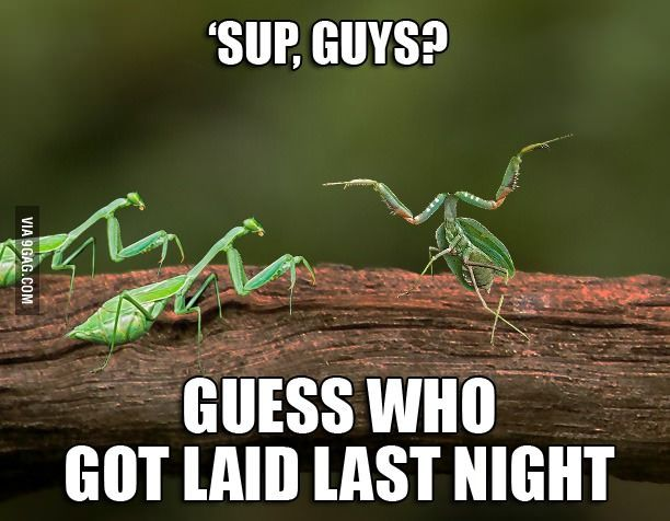 They Did It Mantis Style Really Funny Funny Captions Funny Pictures