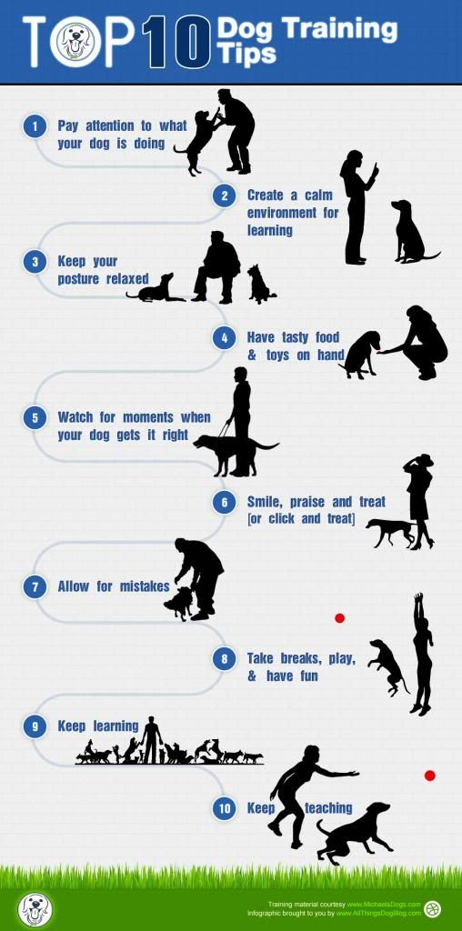 10 Dog Training Tips MANS BEST FRIENDS Pinterest