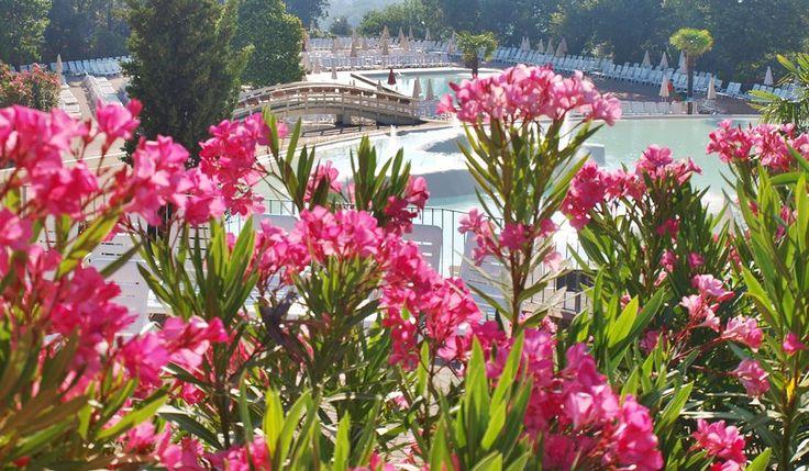 little----things.blogspot.com morning in Tuscany Figline Valdarno Norcenni Girasole Club