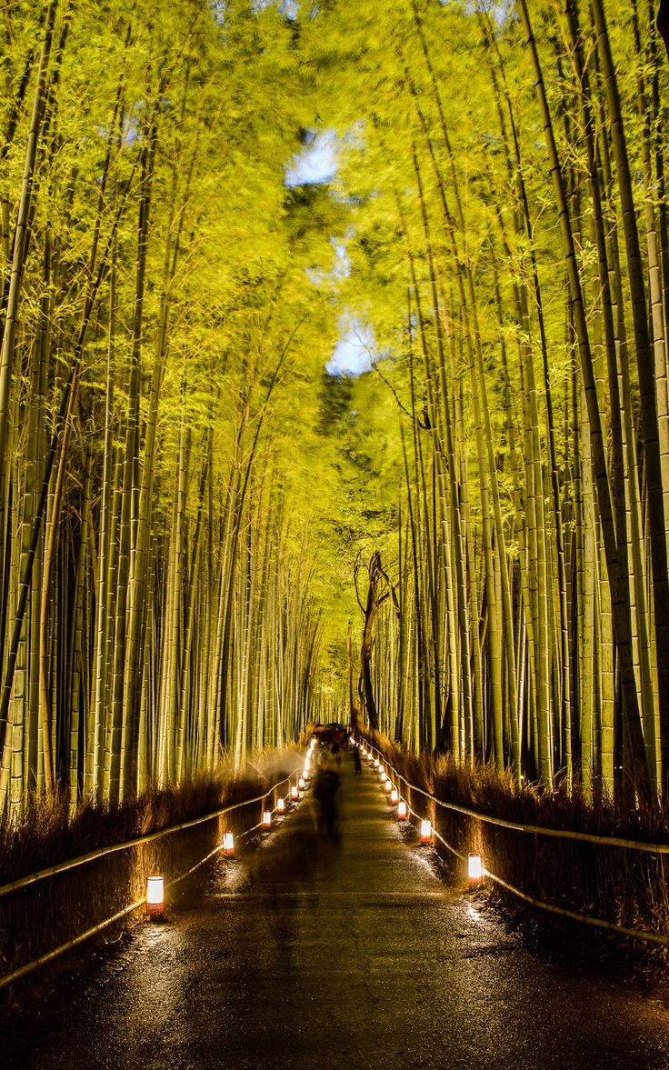 Sagano Bamboo Forest (Japan) *Tripket- Perfect App for fellow travelers- http://lnc.hr/s3P8Y