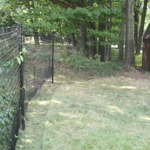dog fence kit with coyote protection