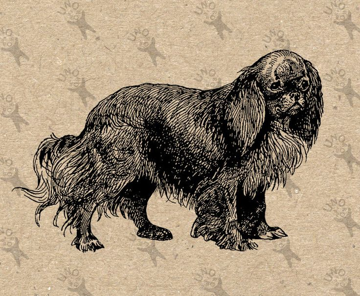 Retro image Ruby Spaniel Dog Instant Download Vintage Digital printable clipart graphic Burlap Transfer Scrapbooking Prints etc HQ 300dpi by UnoPrint on Etsy